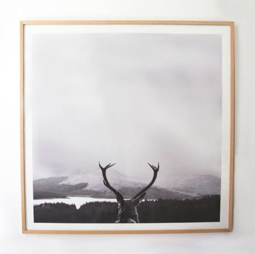 Deer Views