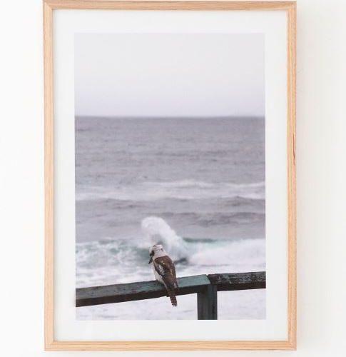 Kookaburra framed