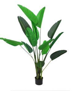 Strelitzia (Bird of Paradise) with Pot