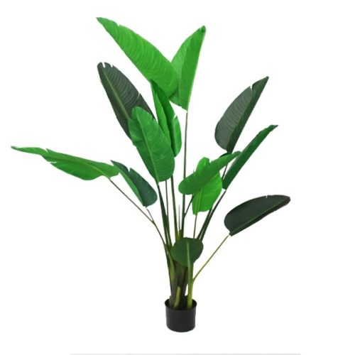Strelitzia (Bird of Paradise) with Pot